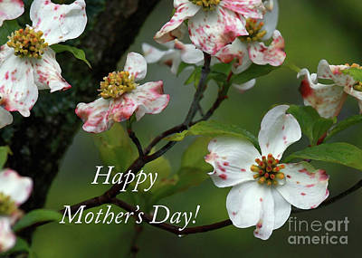 Print featuring the photograph Mother's Day Dogwood by Douglas Stucky