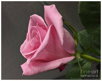 Photograph - Mother's Day Rose by Carol  Bradley