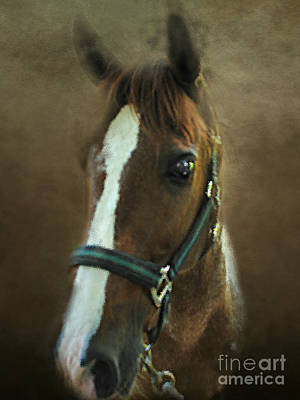 Paso Fino Photograph - Mother's Eyes by Anita Faye