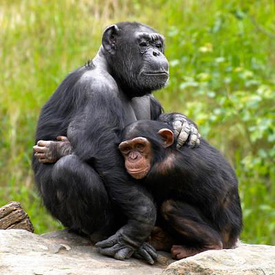 Photograph - Mothers Hug by Jouko Lehto