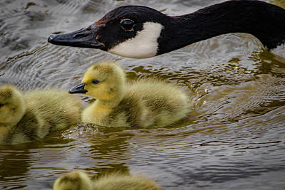 Photograph - Mother's Instinct by Ray Congrove