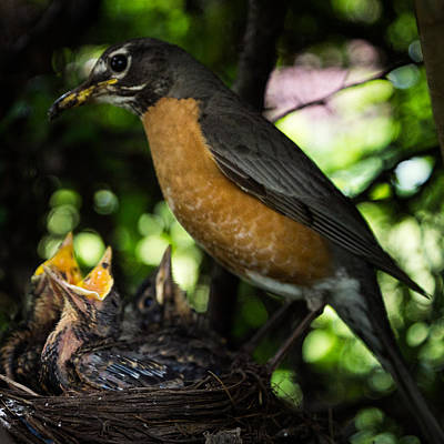 Photograph - Mother's Watchful Eye by Chris Bordeleau
