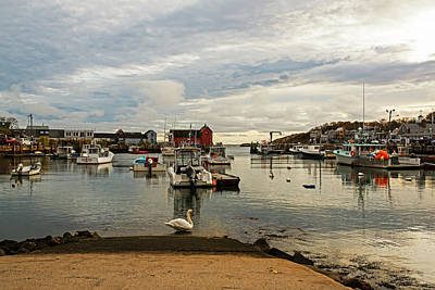 Photograph - Motif #1 Swan Rockport Ma by Toby McGuire