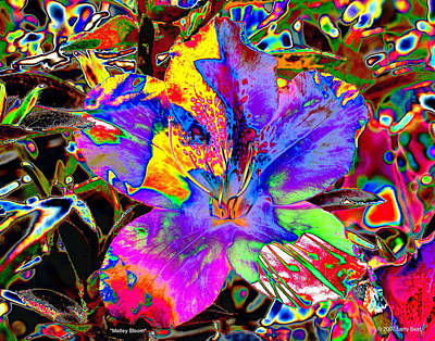 Digital Art - Motley Bloom by Larry Beat