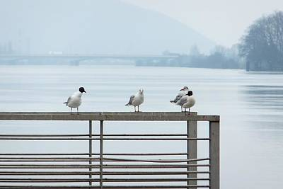 Photograph - Mouette Interrogee by Marc Philippe Joly