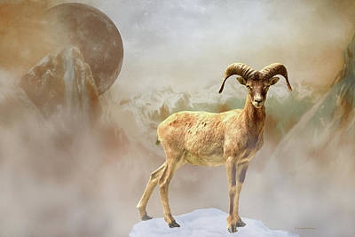 Photograph - Mouflon Sheep Above The Fog-painted by Ericamaxine Price