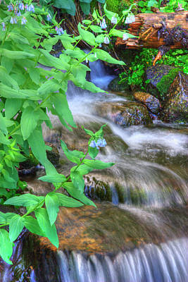 Photograph - Mounain Bluebells by Utah Images