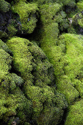 Mounds Of Moss Art Print