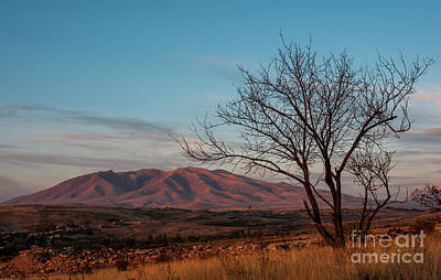 Photograph - Mount Ara At Sunset With Dead Tree In Front, Armenia by Gurgen Bakhshetsyan