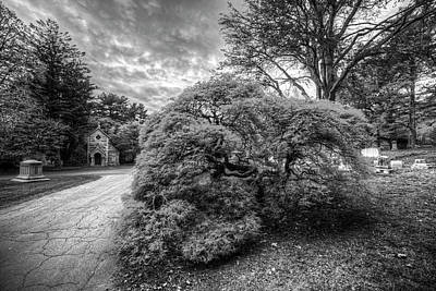 Photograph - Mount Auburn Cemetery Beautiful Japanese Maple Tree Orange Autumn Black And White by Toby McGuire