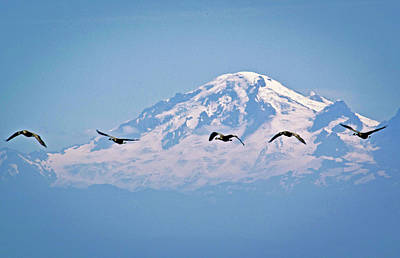 Chris Walter Rock N Roll - Mount Baker with Canada geese  by Rob Mclean