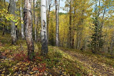 Photograph - Mount Elbert Autumn Forest by Cascade Colors
