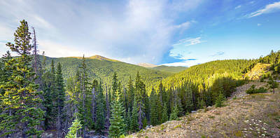 Photograph - Mount Evans Forest Vista by Lynn Palmer
