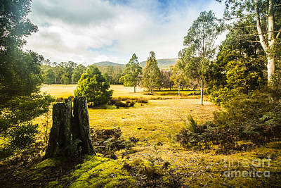 Photograph - Mount Field Forest In Tasmania by Jorgo Photography - Wall Art Gallery
