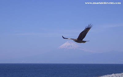 Mount Fuji With Eagle Art Print by Mark Lelieveld