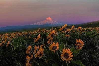 Trail Photograph - Mount Hood And Balsam Root Blooming In Spring by David Gn