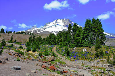 Photograph - Mount Hood - Mid Summer by Scott Cameron