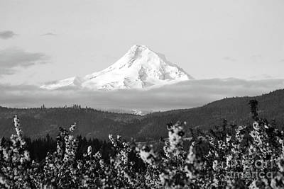 Photograph - Mount Hood Snow Orchard by Andrea Hazel Ihlefeld