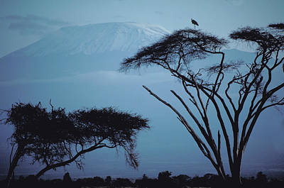 Photograph - Mount Kilimanjaro In Kenya by Carl Purcell