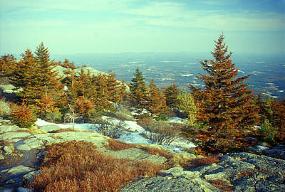 Mount Monadnock Photograph - Mount Monadnock Spruce Injury by John Burk