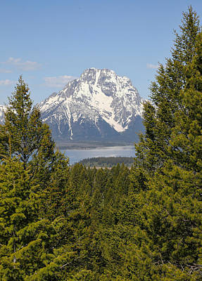 Mount Moran Framed In Green Art Print