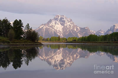 Photograph - Mount Moran by Reva Dow