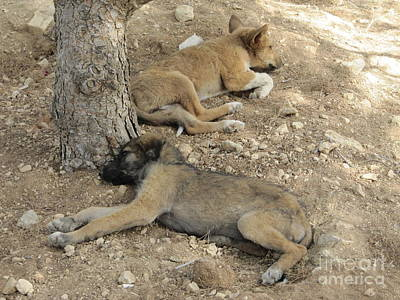 Photograph - Mount Nebo Pups by Donna L Munro