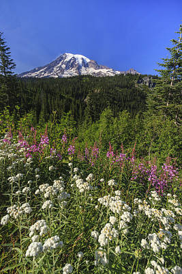 Forest Photograph - Mount Rainier by Adam Romanowicz