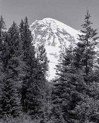 Photograph - Mount Rainier Forest Black And White by Dan Sproul