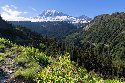 Photograph - Mount Rainier From Scenic Viewpoint by David Gn
