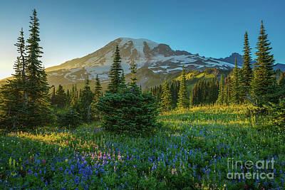 Photograph - Mount Rainier Golden Wildflowers Meadows Sunlit by Mike Reid