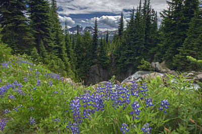 Photograph - Mount Rainier Meadow by Rick Berk