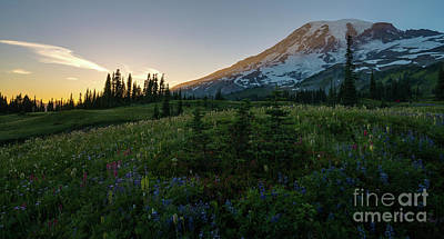 Photograph - Mount Rainier Wildflowers Meadows At Dusk by Mike Reid