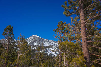Mount Rose Photograph - Mount Rose Wilderness by Scott McGuire