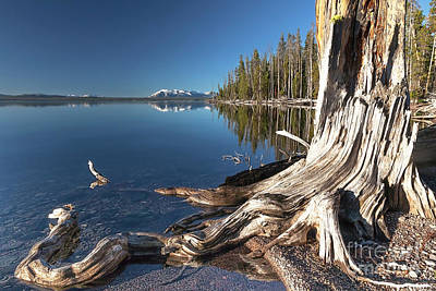 Mannequin Dresses - Mount Sheridan, Yellowstone Lake, Dead Tree by Daryl L Hunter