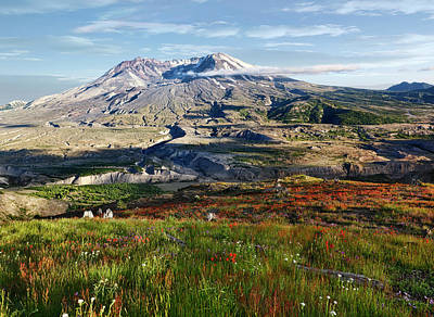 Photograph - Mount St Helens Wildflowers by Wes and Dotty Weber
