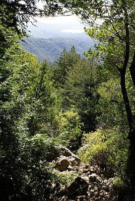 Mount Tamalpais Forest View Art Print