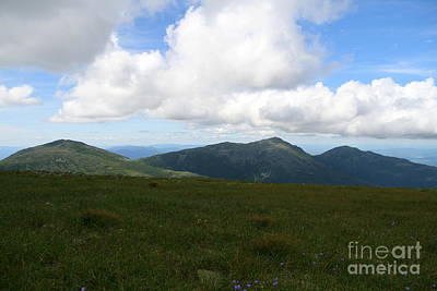 New Hampshire Photograph - Mount Washington Summer Wildflowers  by Neal Eslinger