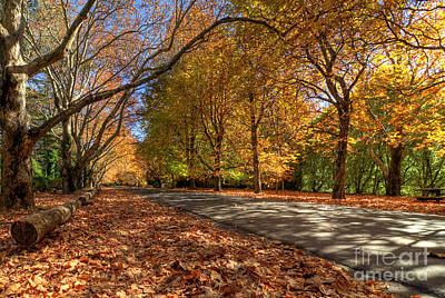 Photograph - Mount Wilson The Glorious Colours Of Autumn Nsw Australia by David Iori
