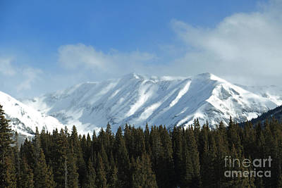 Photograph - Mountain And Forest by Mary Haber