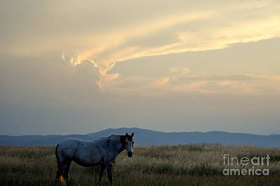 Photograph - Mountain And Horse1 by Anjanette Douglas