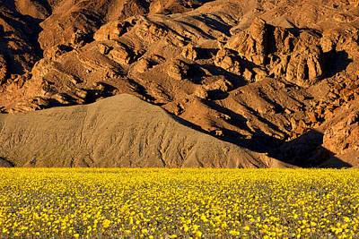 Photograph - Mountain And Wildflowers #2 - Death Valley by Stuart Litoff