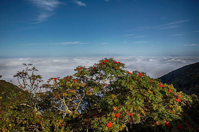 Digital Art - Mountain Ash Berries Above The Clouds by John Haldane