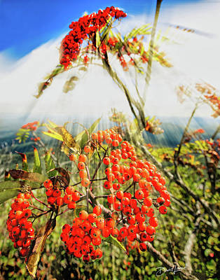 Photograph - Mountain Ash Sunshine by David A Lane