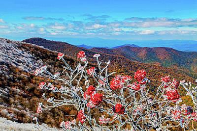 Photograph - Mountain Ashe by Dale R Carlson