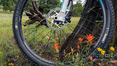 Photograph - Mountain Bike In Meadow by Marianne Jensen