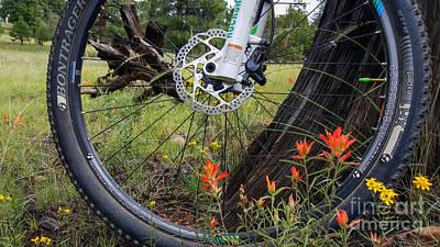 Photograph - Mountain Bike In Meadow by Marianne Jensen