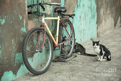Moroccan Photograph - Mountain Bike Moggies  by Rob Hawkins