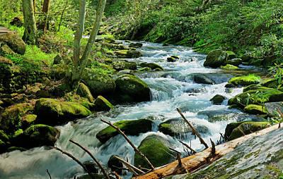 Photograph - Mountain Brook by David Frankel