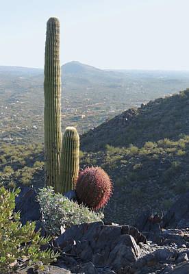 Mountain Cactus Art Print by Gordon Beck